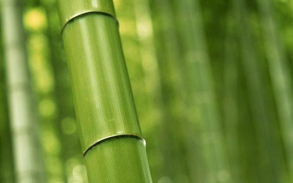 A Closeup Of Multiplex Bamboo