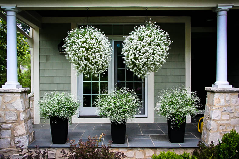 Flowering Bushes For Planters