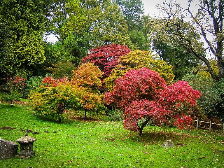 Japaneses Maple garden