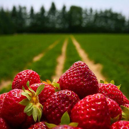 Strawberry Bushes