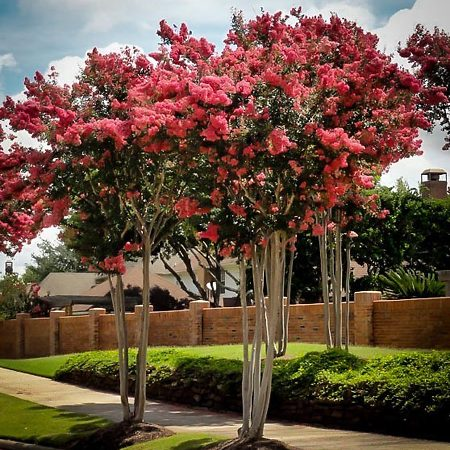 Trees Online With Free Shipping