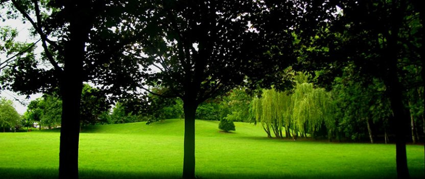 Trees to Grow in Shady Places