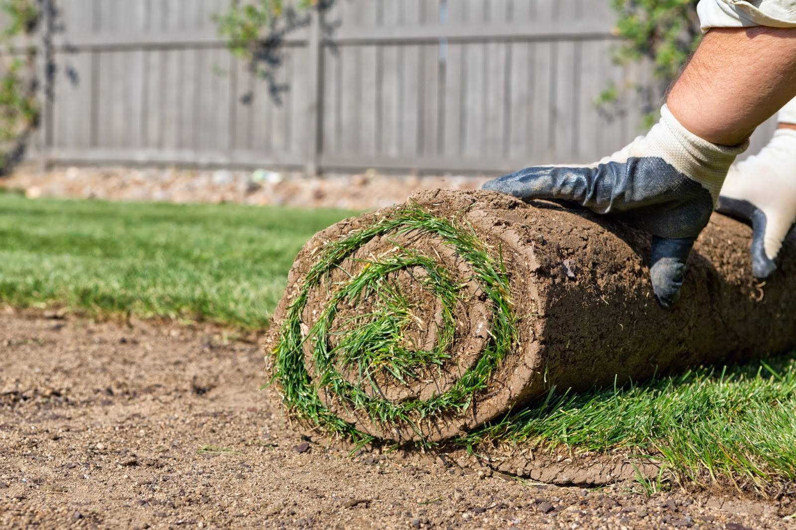 How to lay sod the tree center for Borde plastico para jardin