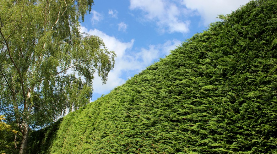 Protecting Your Hedges In Winter