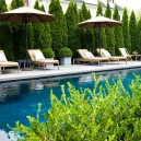 Privacy Trees, Row of Emerald Green Thujas as Pool Privacy Fence