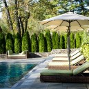 Privacy Trees, Thuja Emerald Green Pool Screen