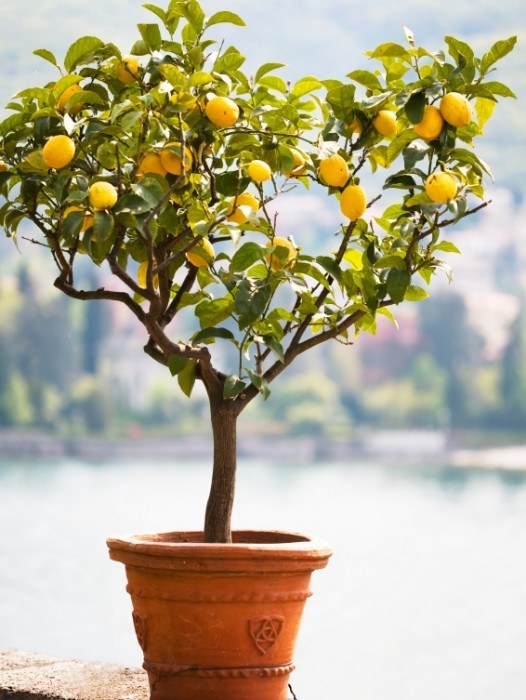 buy fruit trees online  the tree center™, Beautiful flower