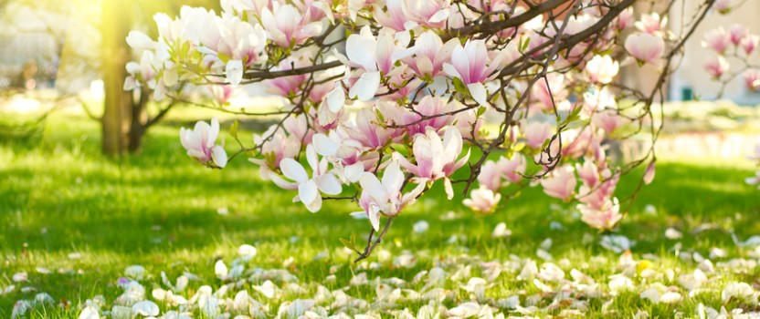 Flowering Trees and Shrubs for Early Spring