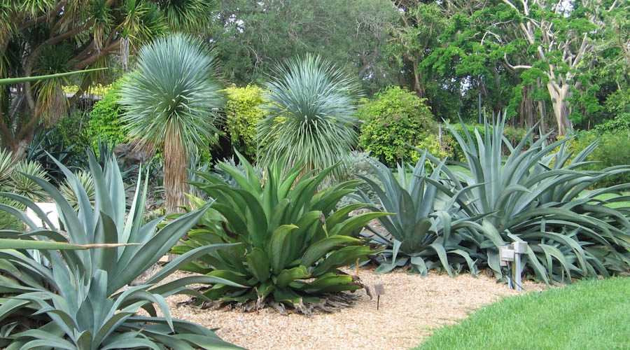 Agave & Yucca – Cool Plants for Hot Places