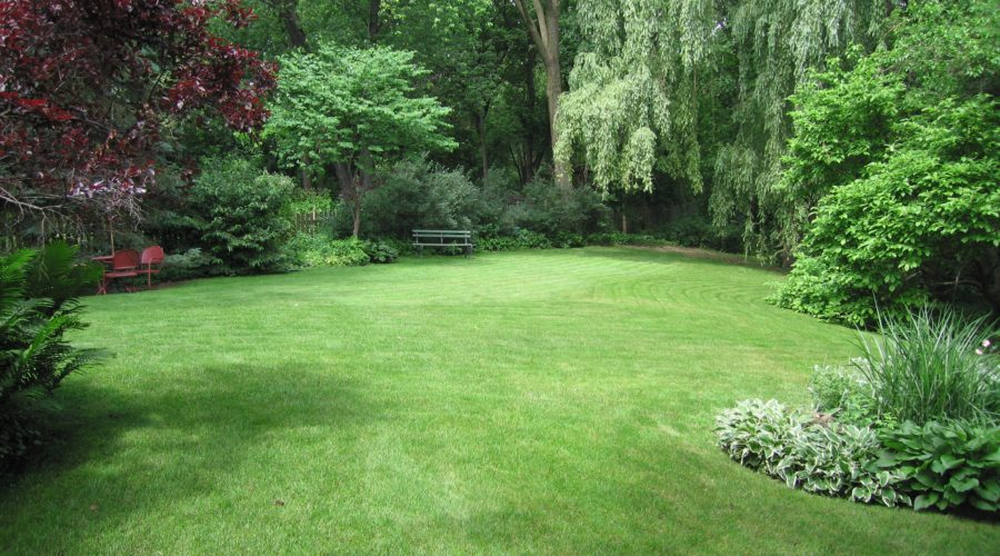 5 Steps to Know Your Garden Better