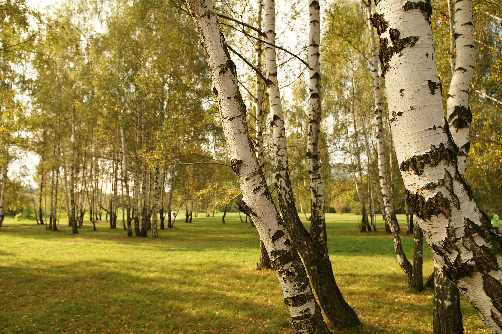 A garden of native trees and shrubs the tree center for Garden trees shrubs