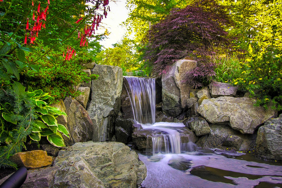 7 Top Plants for Japanese Gardens | The Tree Center™ Japanese Garden Pond Design on japanese modern garden design, japanese garden pool design, japanese garden fountain design, japanese garden stone design, japanese garden gate design, japanese style garden design, vineyard pond design, japanese garden wood design, japanese garden design ideas, japanese vegetable garden design, japanese koi pond design, landscape mediterranean garden design, japanese garden grass design, japanese garden design small spaces, japanese garden fence design, beach pond design, japanese water gardens, fountain pond design, japanese maple tree garden design, waterfall pond design,