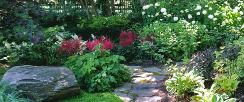 Understanding Shade in the Garden