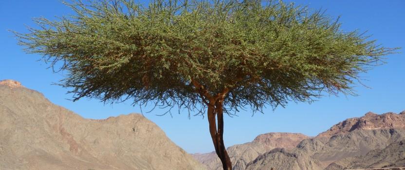 Tough Trees for Tough Places