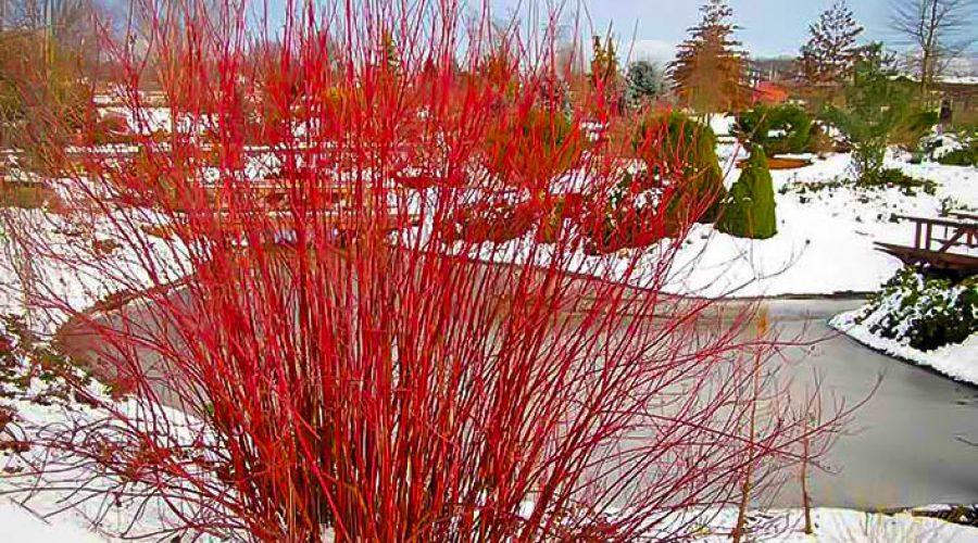 Plan Ahead for Winter Interest in the Garden