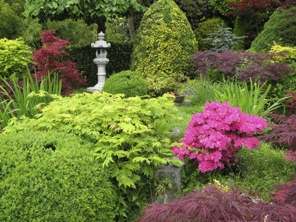 Tips on Placing Shrubs in Your Garden | The Tree Center™