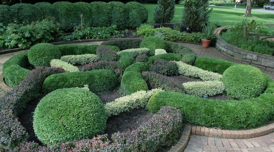 Choosing the Right Boxwood for Your Garden