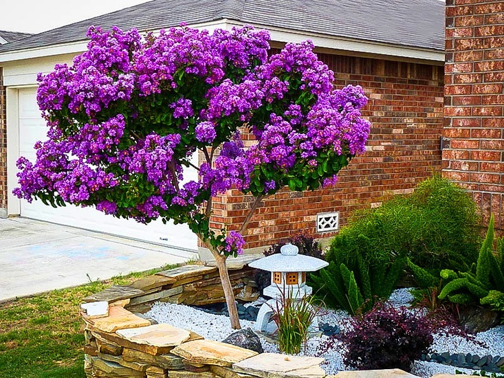 Catawba Crape Myrtle additionally 3 furthermore Blue Chinese Wisteria moreover Silos besides 1778. on magnolia gardens texas