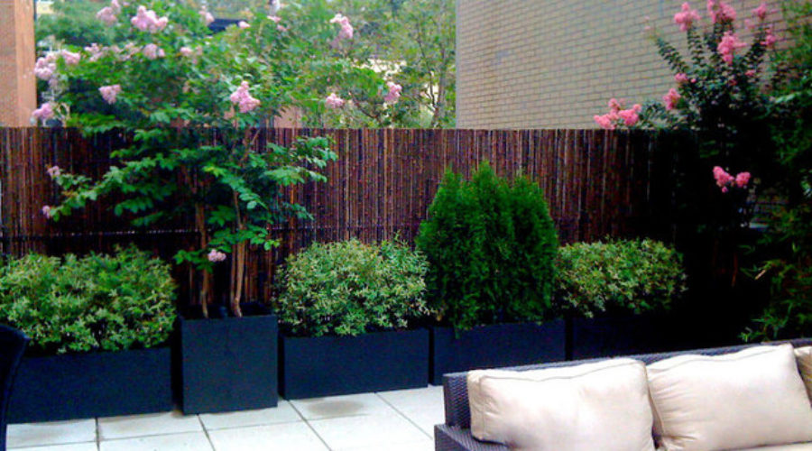 Trees in Containers – Perfect for the Smaller Garden. Part 2