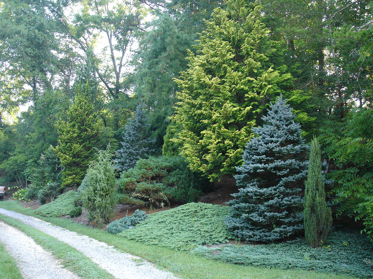 7 Great Evergreens For Winter Interest The Tree Center