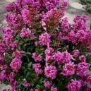 enduring-summer-lavender-crape-2