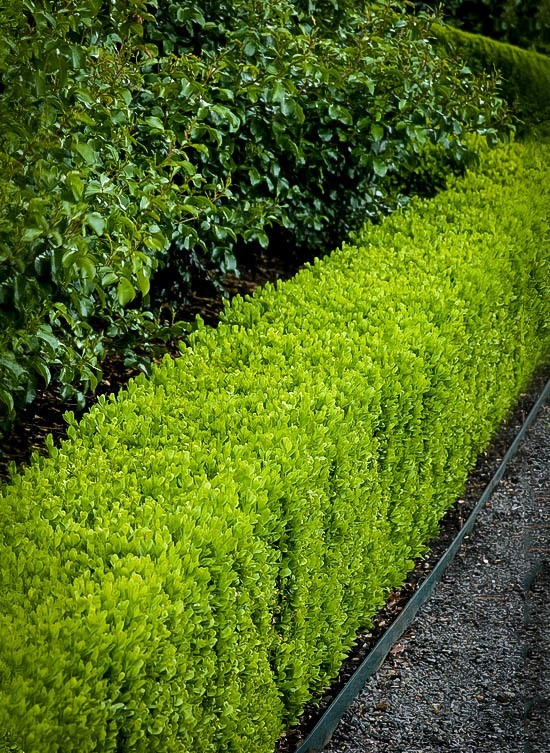 Boxwood Garden Design