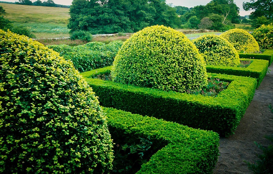 Pick the Right Boxwood