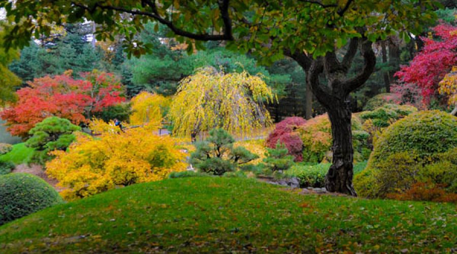 Time to Plan for Fall Color