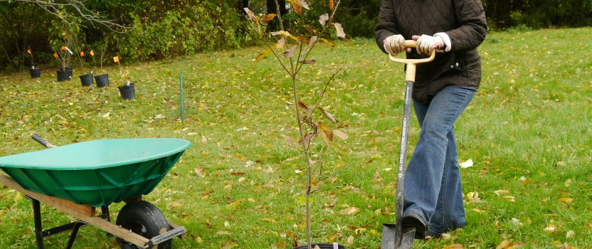 Fall – The Ideal Planting Season