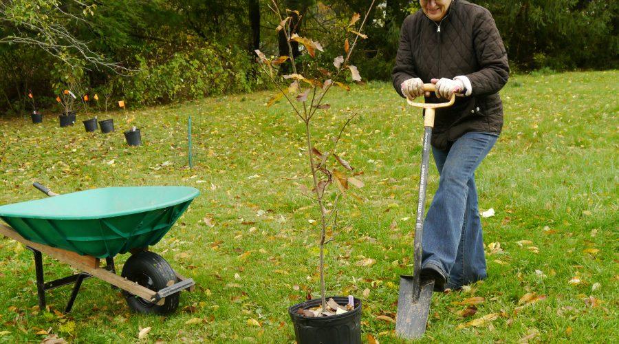 Fall – the Ideal Planting Season