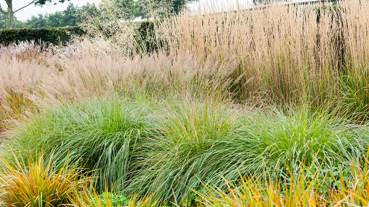 A Guide to Gardening with Ornamental Grasses | The Tree ...