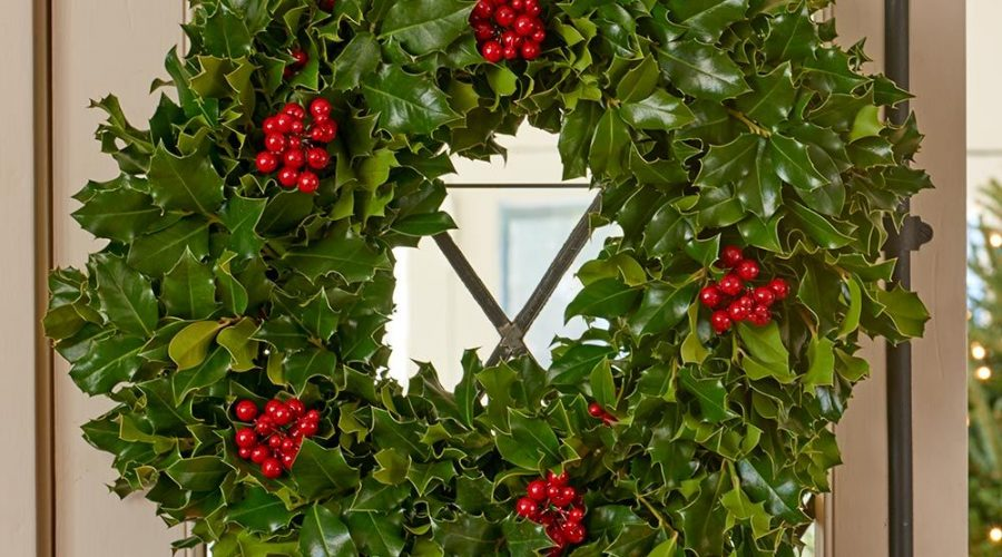 Holly – the Perfect Tree for Christmas