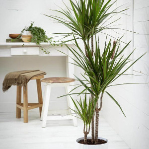 Growing Houseplants In Your Home