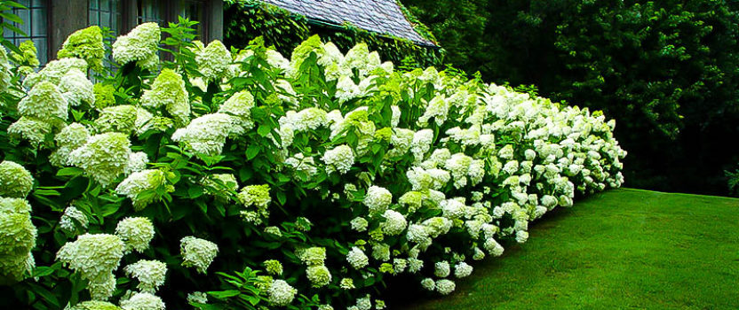 Modern Twists on the PG Hydrangea