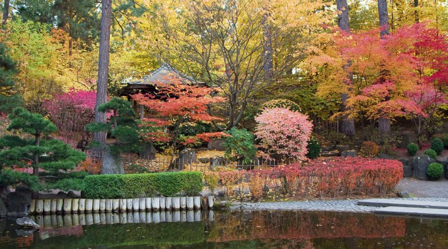 Classic Trees for a Japanese Garden
