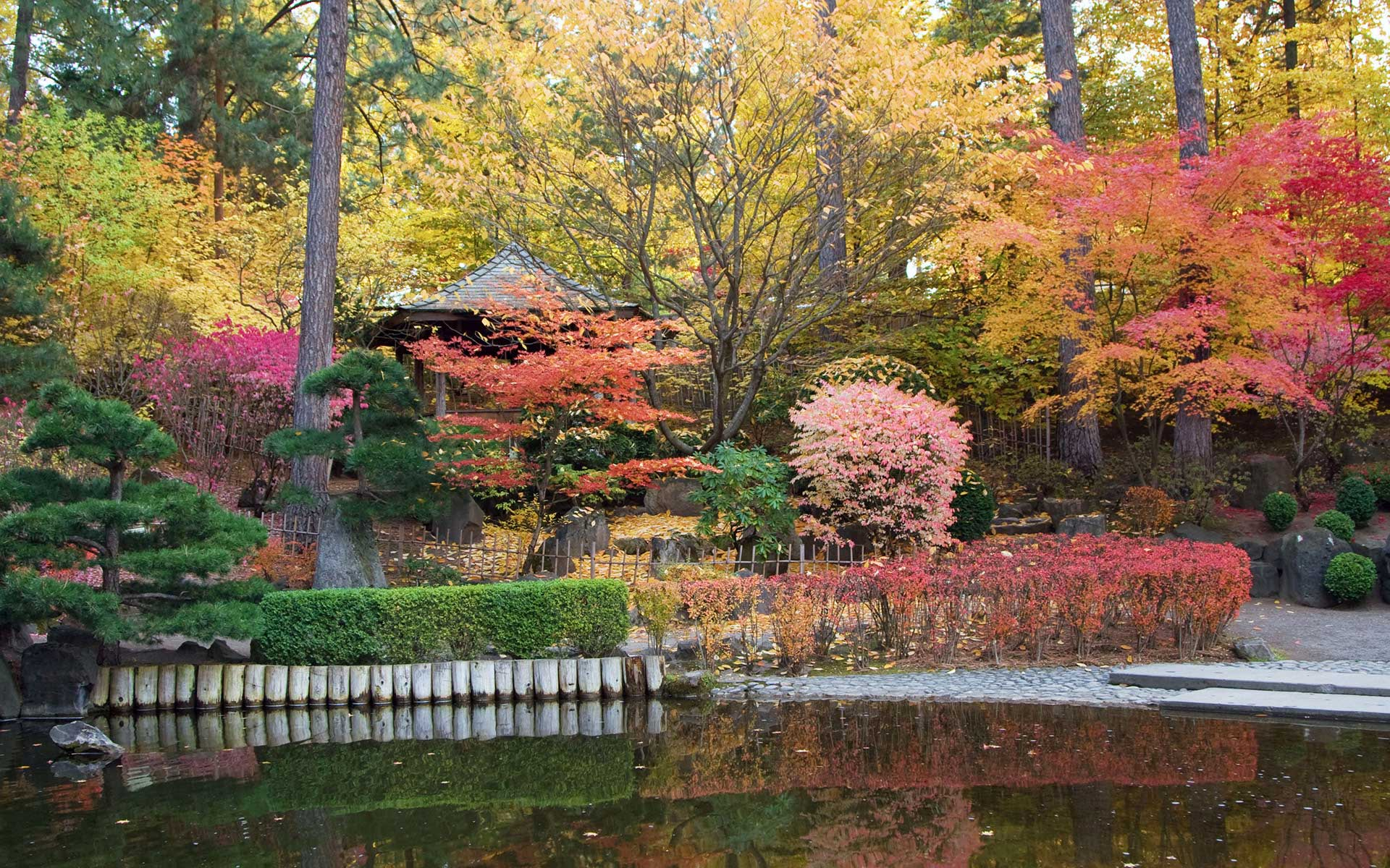 Classic trees for a japanese garden the tree center - How to make a japanese garden ...