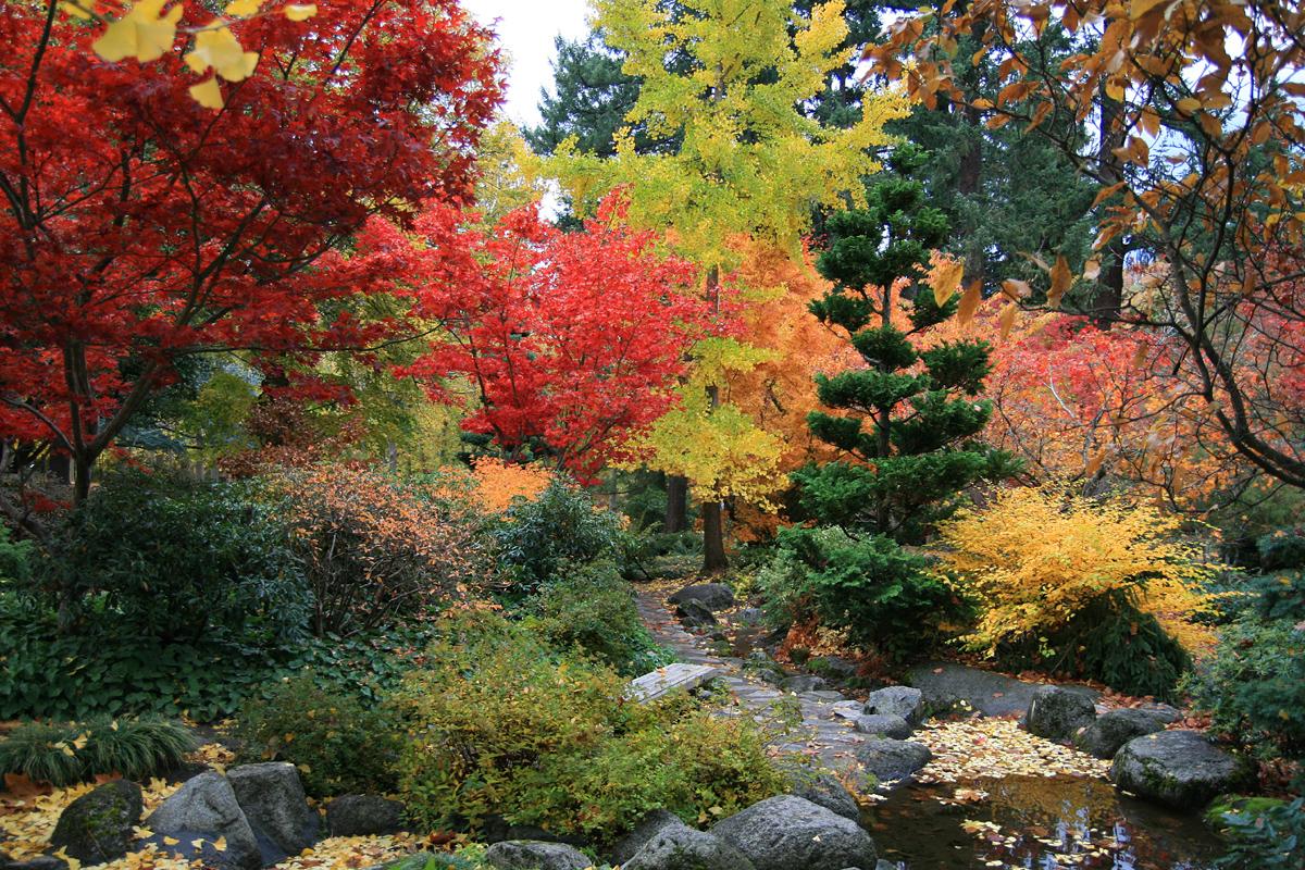 Summer care of japanese maple the tree center for Japanese garden trees