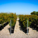 kay-parris-magnolia-3