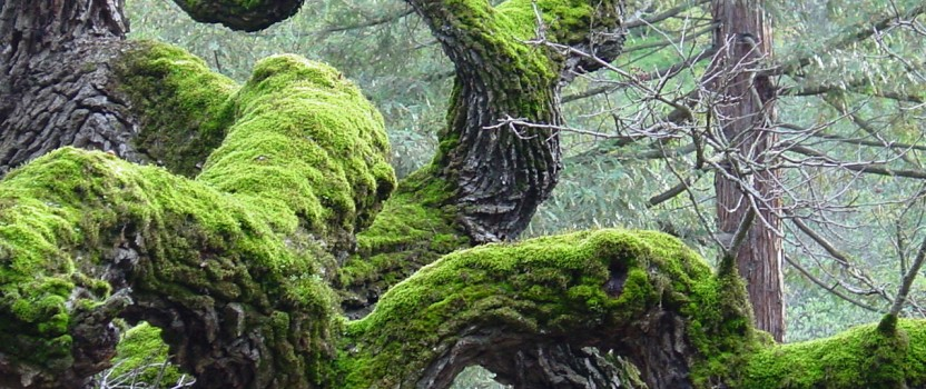 Moss on Trees