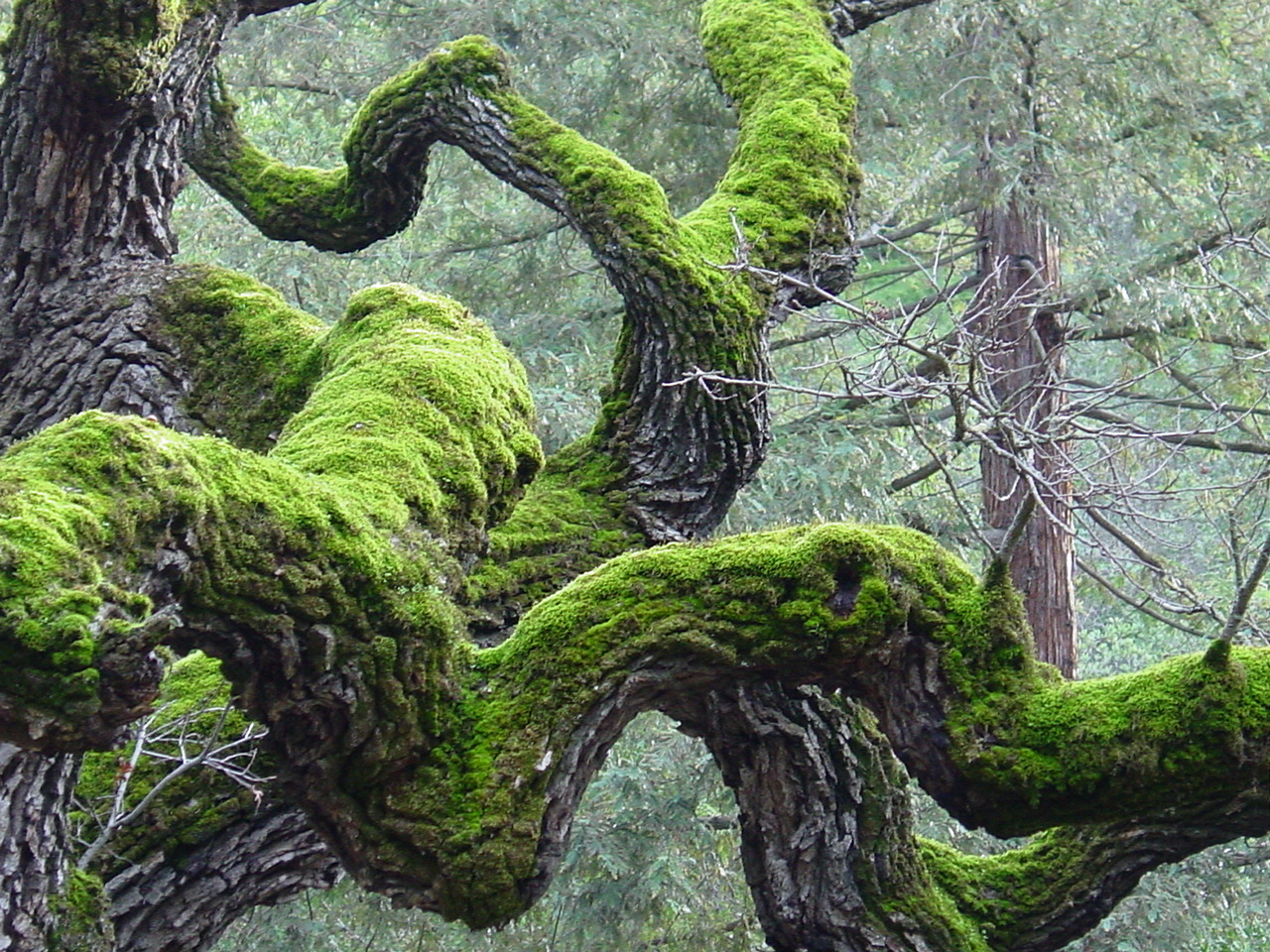 Moss on Trees | The Tree Center™