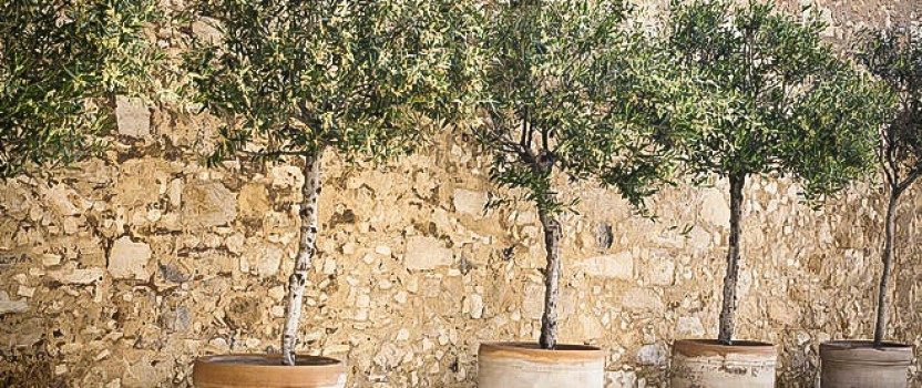 Dwarf Trees To Grow In Containers