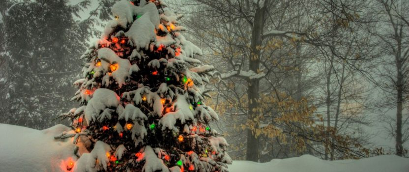 5 Trees That Make the Perfect Gift