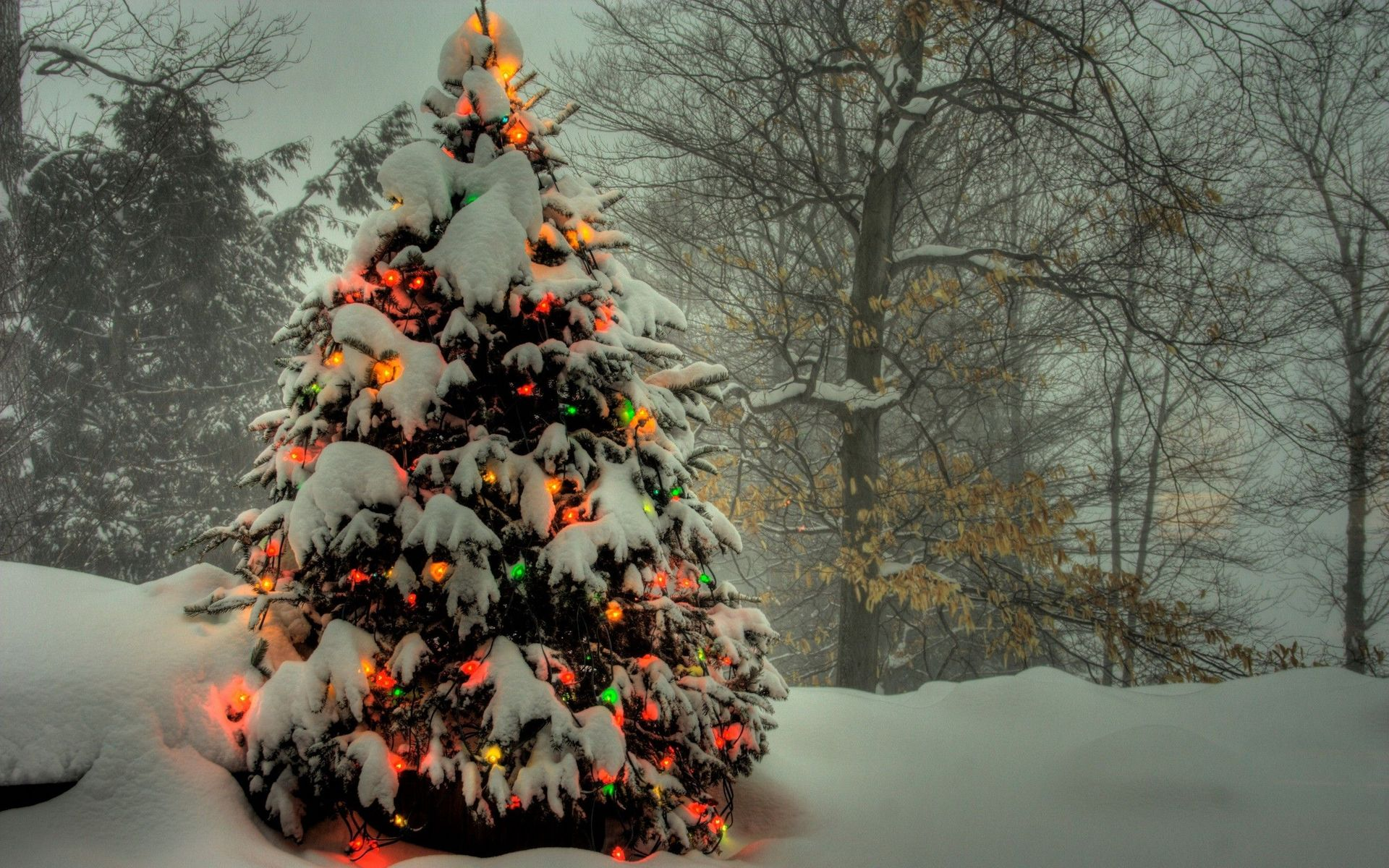 5 trees that make the perfect gift - Outside Christmas Tree Decoration Ideas