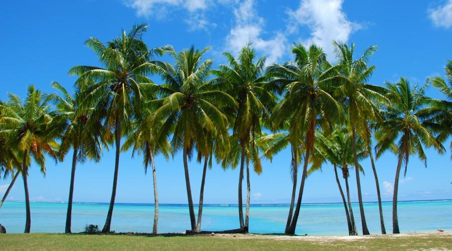 How Fast Do Palm Trees Grow?