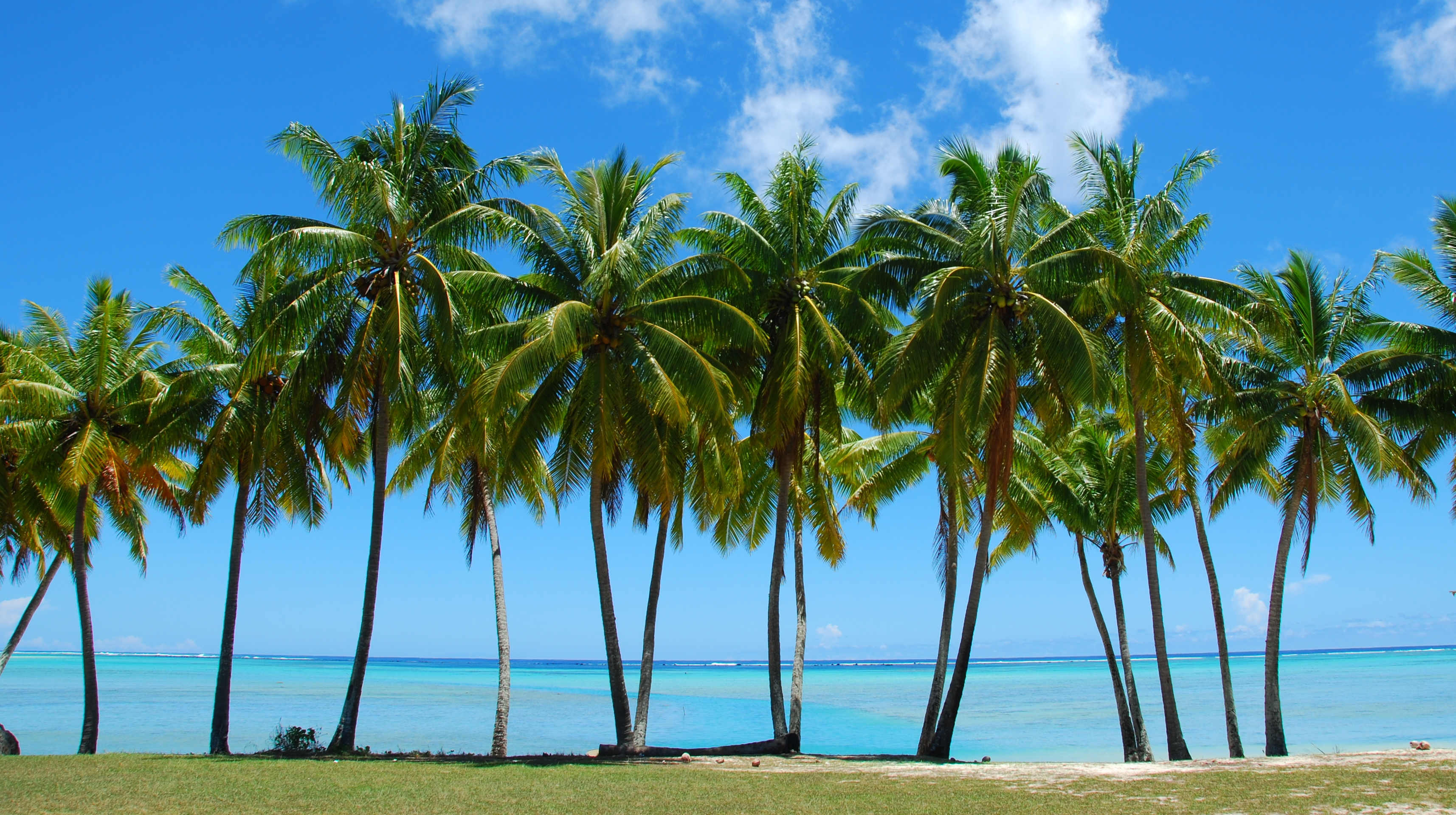 Palm Trees On The Beach: How Fast Do Palm Trees Grow?