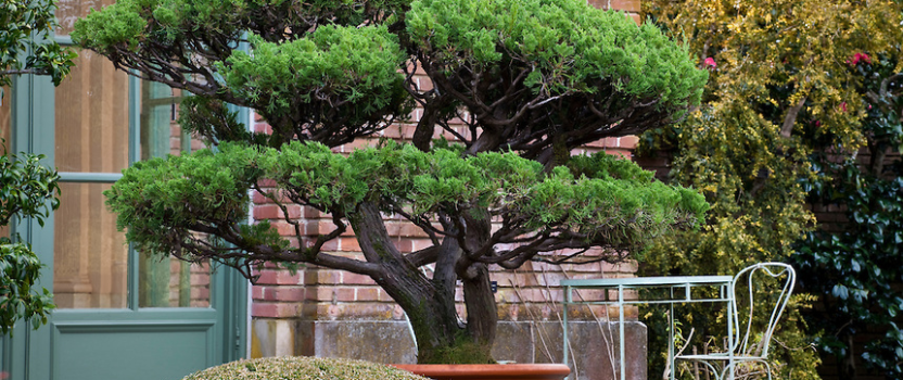 Trees in Containers – Perfect for the Smaller Garden. Part 1