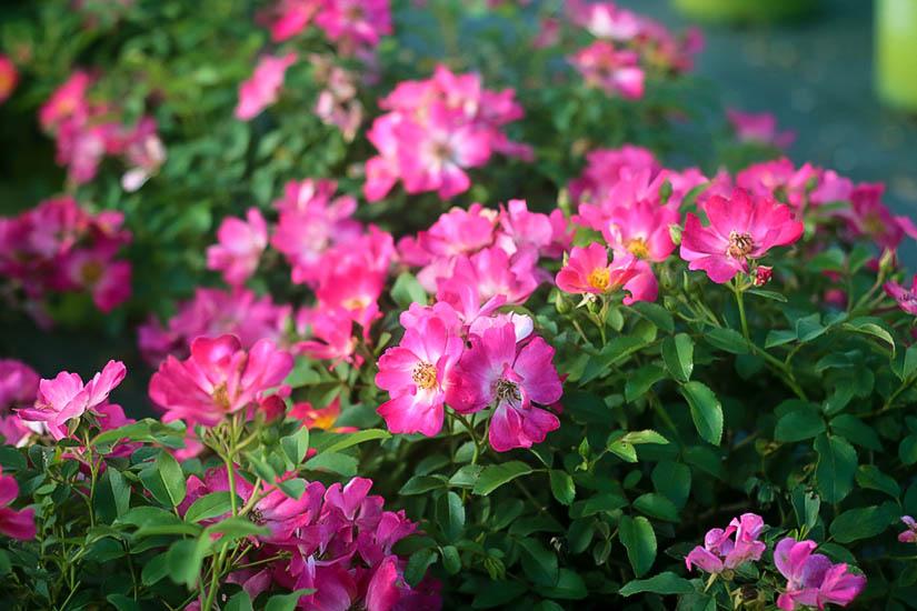 Plant Hardiness Zones 4 11