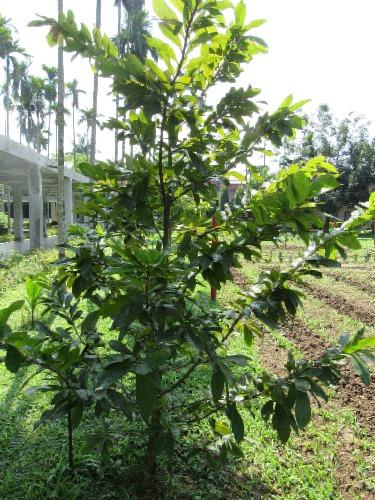 Growing Pistachios: How Do Pistachios Grow