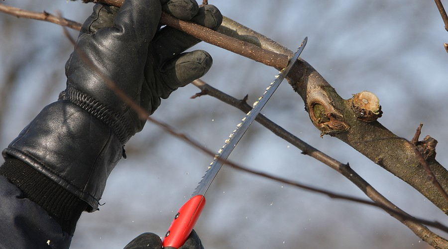 How and When To Prune Fruit Trees