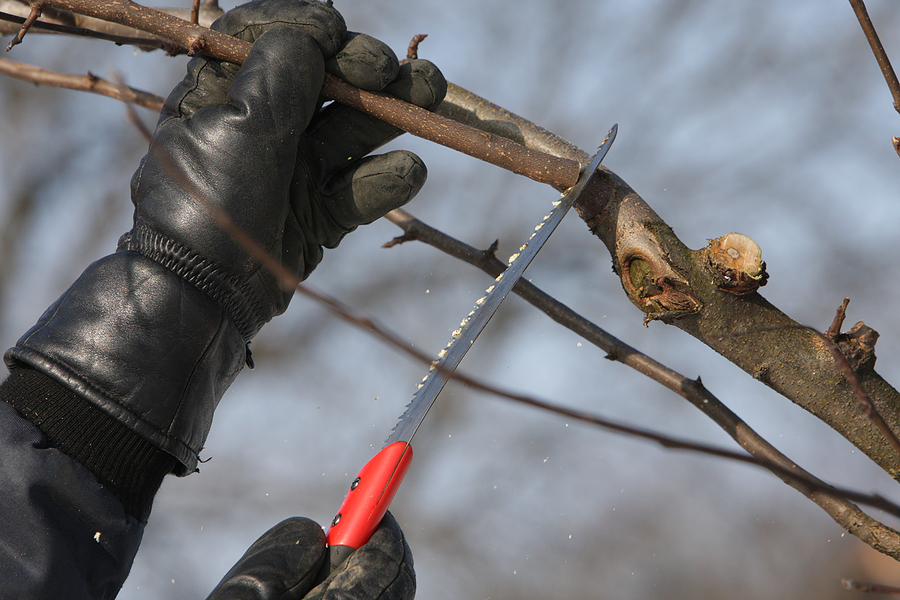 Time Of Year To Prune Fruit Trees Part - 24: How And When To Prune Fruit Trees